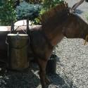 metal-horse-1408554176-jpg
