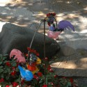 rooster-balance-1408557849-jpg